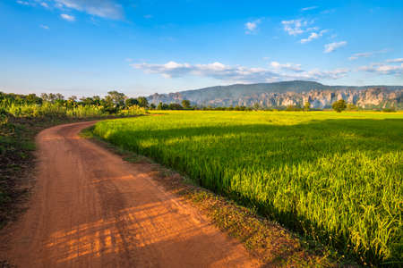 Rice field along the dirt road with limestone mountain, travel scenic at Noen Maprang district, Phitsanulok, Thailand 版權商用圖片