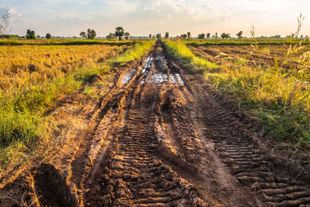 Muddy rough road with tire tracks of tractors in the rice field 版權商用圖片