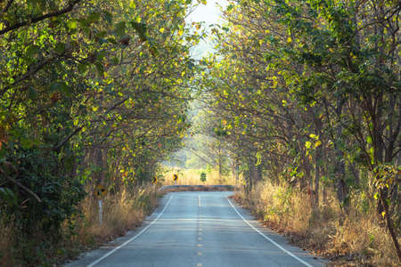 Beautiful road through the teak forest in countryside