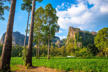 Corn farm in the village with limestone mountain range, countryside view and tourist attraction at Noen Maprang district, Phitsanulok, Thailand