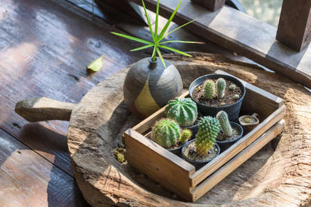 Small cactus decorated on the floor in old style thai house, small garden corner on old wooden container adapted from antique utensil