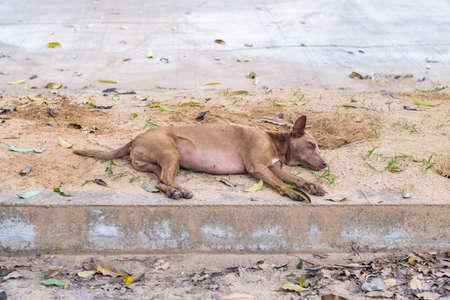Abandoned stray dog sleeping on the roadside near the public park