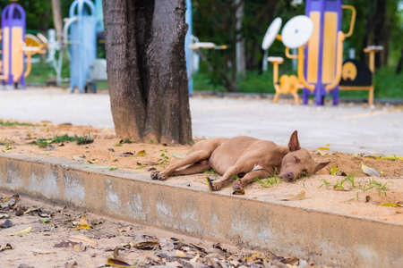 Abandoned stray dog sleeping on the roadside near the public park, places that many people tend to abandon their pets