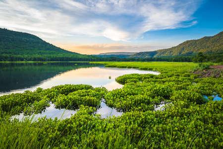 Beautiful lake view full of water hyacinth on the surface, Huay Som Khem reservoir, Phitsanulok, Thailand 写真素材