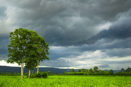 Dark clouds come to the sugar cane farm, with high Yang Na trees in the field, rainy season in countryside 写真素材