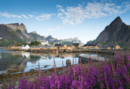 Yellow Fishing hut on the Lofoten islands with lupines in the foreground, Northern Norway Stock Photo