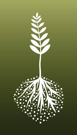 Plant and Roots Vector