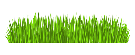 Green grass border (vector design element isolated on white background)