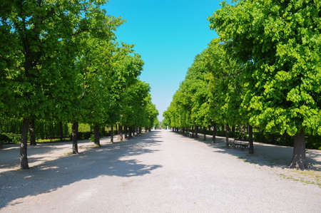 schoenbrunn: garden in Schoenbrunn palace Stock Photo