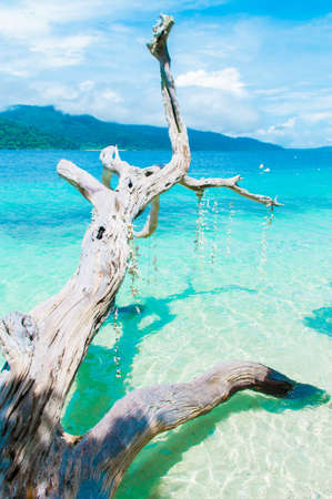 sea with white dead trees Stock Photo - 16762533