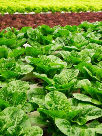 hydroponics: Hydroponics Garden