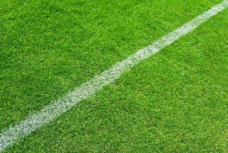 cut grass:  Soccer grass and white lines