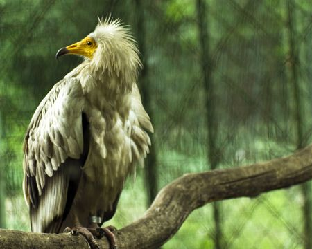 Eagle in the cage photo