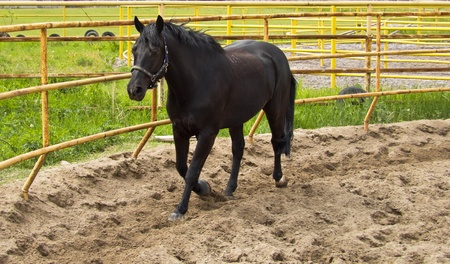 dynamically: horse in an enclosure outdoors