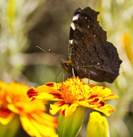 butterfly on a flower in the garden photo