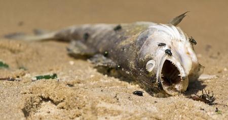 stifle: dead fish on the beach