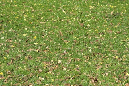green grass in autumn park photo