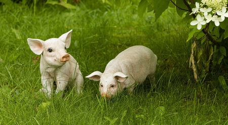 Garden figurines of pigs on a background of green grass.