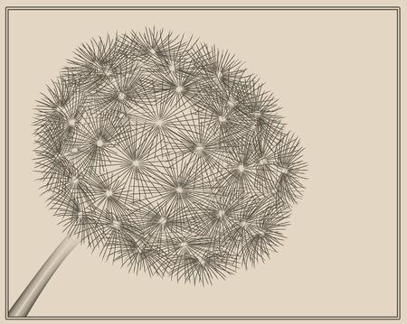 woodcut: dandelion in vector woodcut style