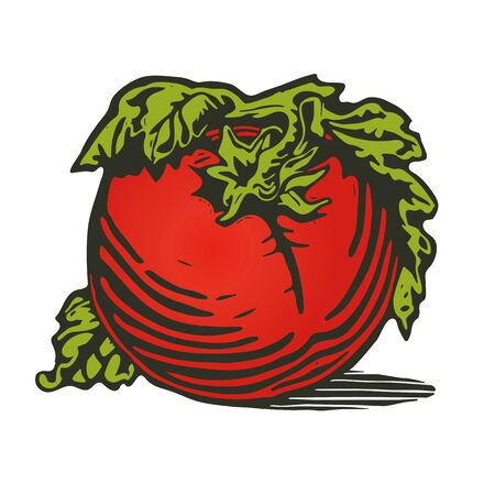 tomatoes: Tomato in woodcut print style Illustration