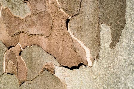 Avion écorce d'arbre close up fond