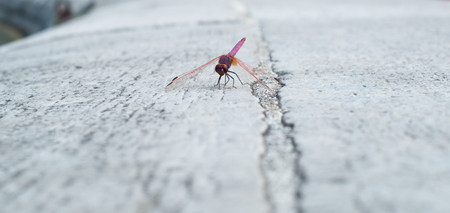 whithe: Dragonfly settled on whithe stone
