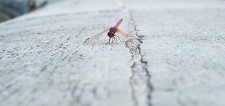 settled: Dragonfly settled on whithe stone