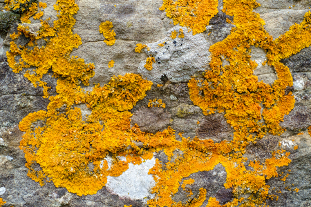 symbiotic: Orange lichens on grey limestone