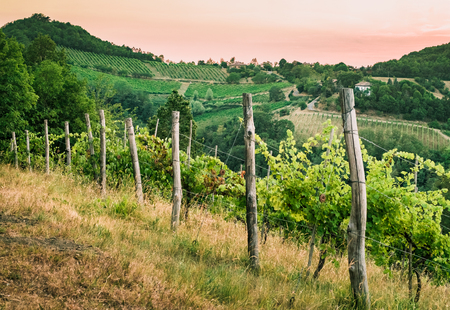 vineyards on the hills near Bologna, Italy. Stock Photo
