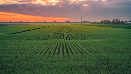 Winter sunrise in the lower Po Valley were growing the wheat. Bologna province, Emilia Romagna, Italy. Banco de Imagens