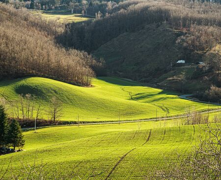 Early morning sunlight over wheat fields in the northern Apennines, Emilia-Romagna, Italy.