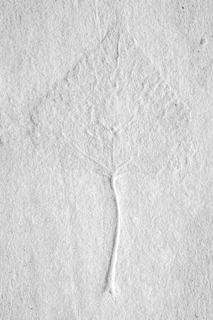 A leaf inside homemade paper sheet