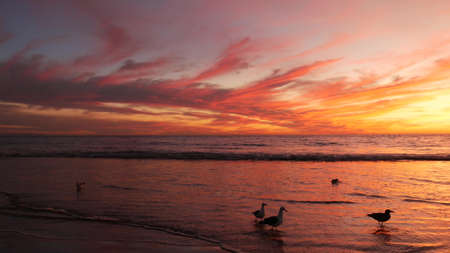 California summertime beach aesthetic, golden sunset. Vivid dramatic clouds over pacific ocean waves. Santa Monica popular resort, Los Angeles CA USA. Atmospheric moody purple evening sundown in LA. Banco de Imagens