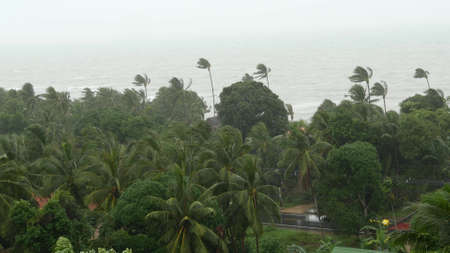 Pabuk typhoon, ocean sea shore in Thailand. Natural disaster, eyewall hurricane. Strong extreme cyclone wind sways palm trees. Tropical flooding rain season, heavy tropical storm weather, thunderstorm
