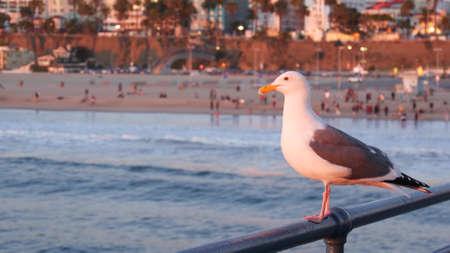 California summertime beach aesthetic, pink sunset. Cute funny sea gull on pier railing. Ocean waves, defocused people and beachfront weekend houses. Purple sundown, Santa Monica Los Angeles CA USA.