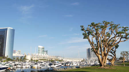 Embarcadero marina park, big coral trees near USS Midway and Convention Center, Seaport Village, San Diego, California USA. Luxury yachts and hotels, metropolis urban skyline and highrise skyscrapers.