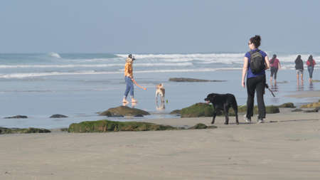 Del Mar, California USA - 23 Jan 2020: Dog friendly beach. People walking and training pets. Owners strolling and playing with various puppies. Men, women and many different dogs running near ocean. Standard-Bild - 158644874