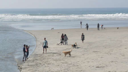 Del Mar, California USA - 23 Jan 2020: Dog friendly beach. People walking and training pets. Owners strolling and playing with various puppies. Men, women and many different dogs running near ocean.