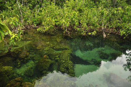 Transparent water in wild tropical pond or river, From above shot of clear water in small lake with mangrove trees roots around