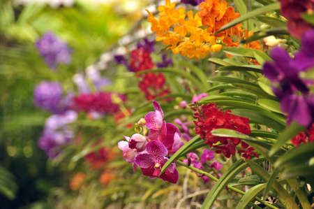 Multicolored flowers with green leaves, View of bright multicolored flowers growing in wild nature