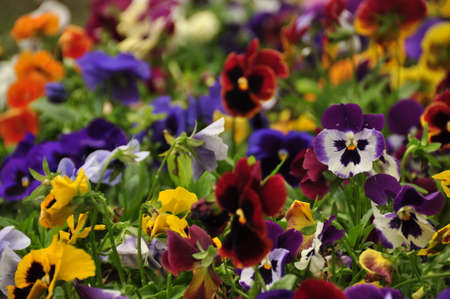Abundance of different bright flowers growing in lush bunch. Multicolored beautiful flowers in bunch. Standard-Bild