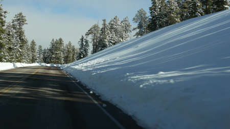 Snow in wintry forest, driving auto, road trip in winter Utah USA. Coniferous pine trees, view from car thru windshield. Christmas vacations, december journey to Bryce Canyon. Eco tourism to woods.
