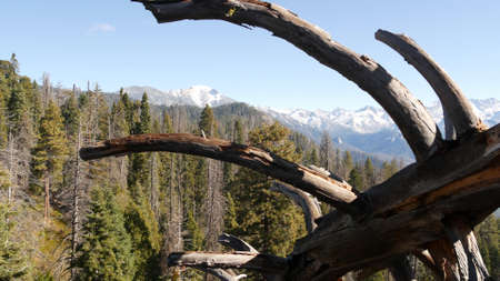 Panoramic view from Moro Rock in Sequoia forest national park, Northern California, USA. Overlooking old-growth woodland, coniferous trees on mountains of Sierra Nevada. Viewpoint near Kings Canyon.