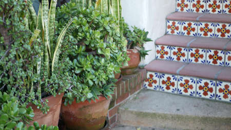 Succulents in flowerpot, gardening in California USA. Green house plants, clay pots. Mexican garden design, arid desert decorative floriculture. Botanical ornamental greenery. Colorful tile on stairs.