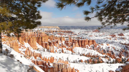 Bryce Canyon in winter, snow in Utah, USA. Hoodoos in amphitheater, eroded relief, panoramic vista point. Unique orange formation. Red sandstone and coniferous pine or fir tree. Eco tourism in America