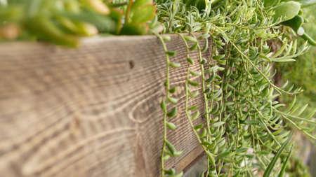 Succulent plants collection, gardening in California, USA. Home garden design, diversity of various botanical hen and chicks. Assorted mix of decorative ornamental echeveria houseplants, floriculture. Stock fotó