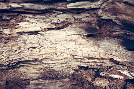 distorted image: Macro of a bark of olive trees in black and white creates an abstract effect of texture Stock Photo