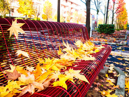 Autumn bench covered with leaves