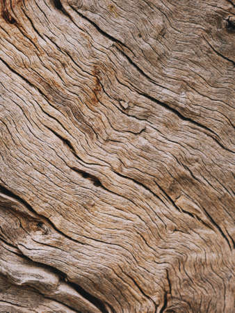 Closeup of a bark of olive trees an abstract effect of texture Banque d'images