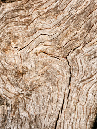 Macro of a bark of olive trees in black and white creates an abstract effect of texture Banque d'images